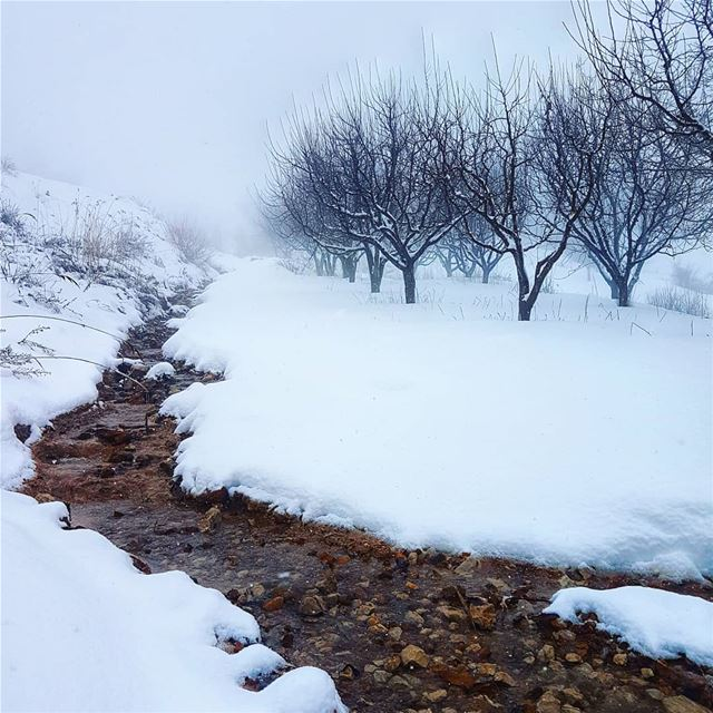 A small creek though the ice  snow  winter  cold  amazing  beautiful ... (Mount Lebanon Governorate)
