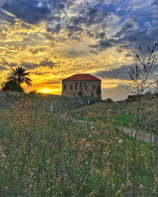 She drifted in the fields spun by the golden sun, she hummed the melodies... (Byblos, Lebanon)