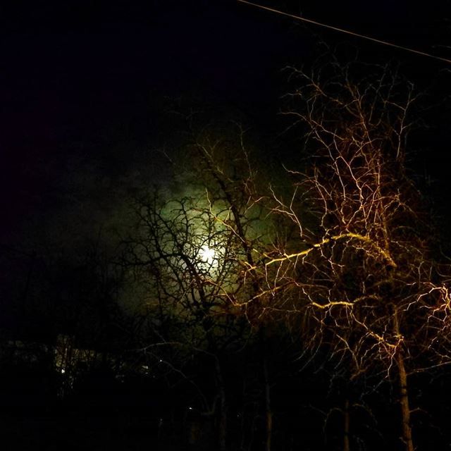 night  sky  full_moon  moon  creepy  scary  clouds  trees  cold ...