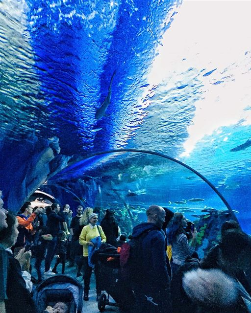 - Traduction Française ⤵️ - Swipe ⬅➡From visiting the aquarium and... (Copenhagen, Denmark)