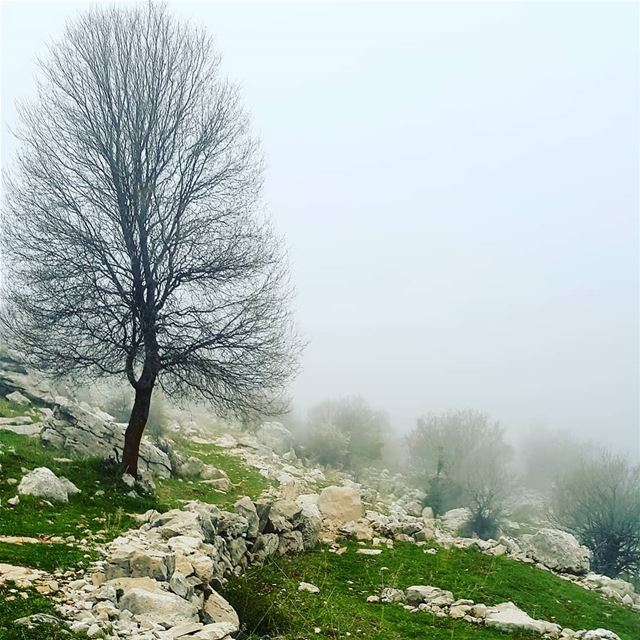 Sometimes when you lose your way in the fog, you end up in a beautiful... (Douma, Liban-Nord, Lebanon)