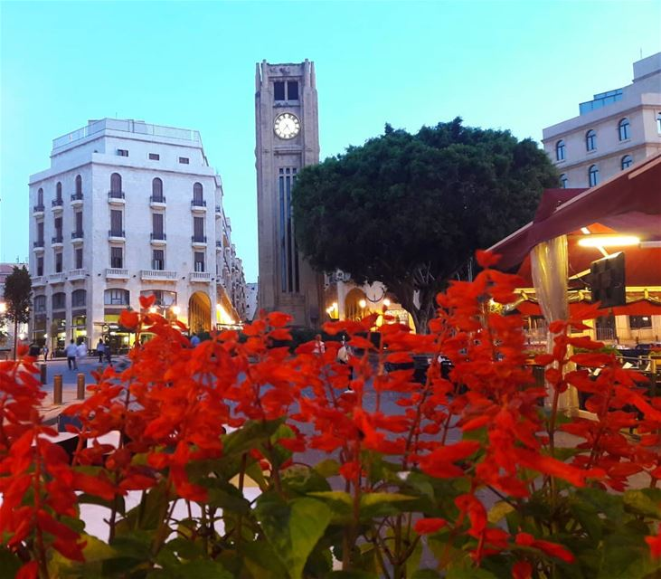 beiruttoday  beirut  downtown  spring   red  flowers  beauty  lebanon ... (Downtown Beirut)