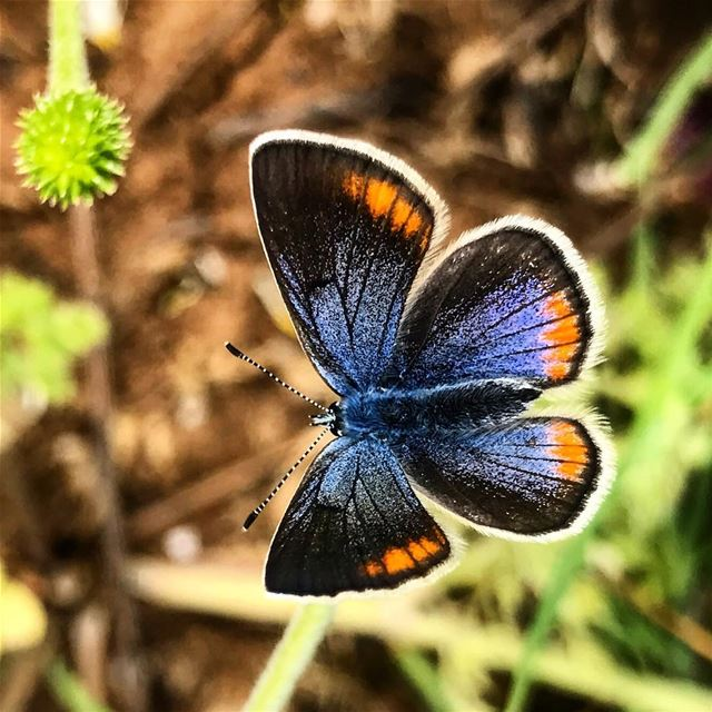 We delight in the beauty of the butterfly but rarely admit the changes it... (Jaj, Mont-Liban, Lebanon)
