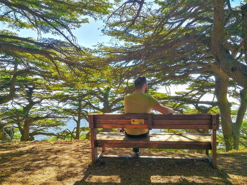 The poetry of earth is never... (Al Shouf Cedar Nature Reserve)