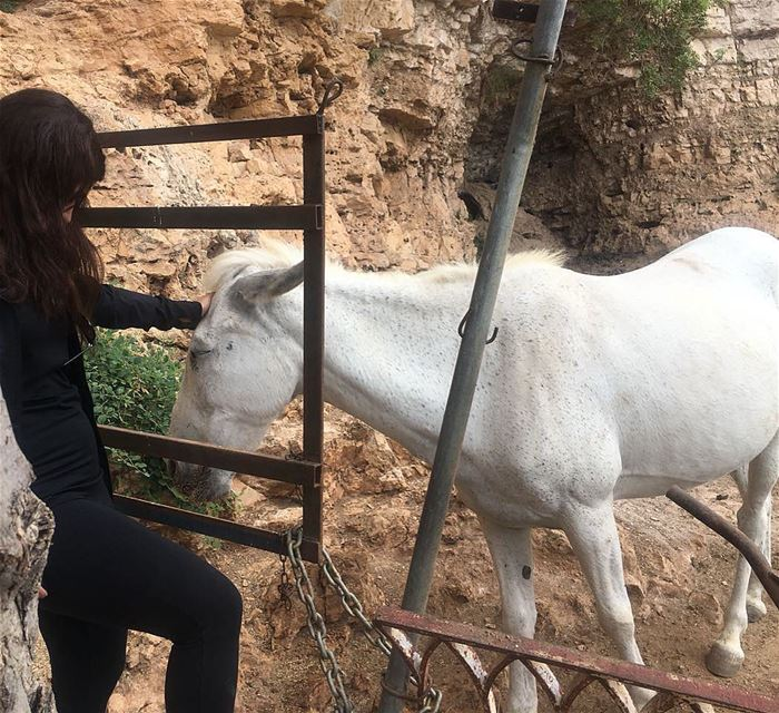 Once in love with  horses always in  Love with horses🦄♥️🇱🇧 animals ... (North Governorate)