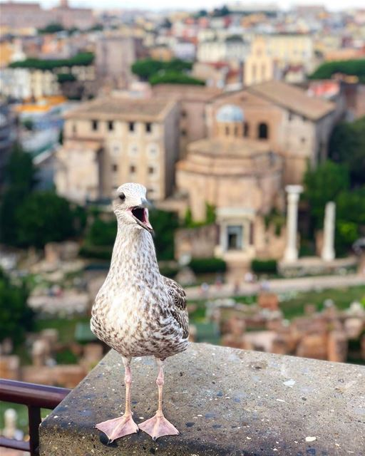 bird keeping an eye on Rome's ruins.📍Palatine hill - Rome, Italy 🇮🇹━ ━ (Rome, Italy)