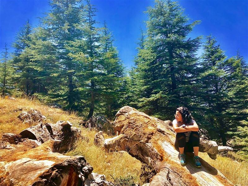 Let's take our heart for a walk in the woods & listen to the magic... (The Cedars of Lebanon)