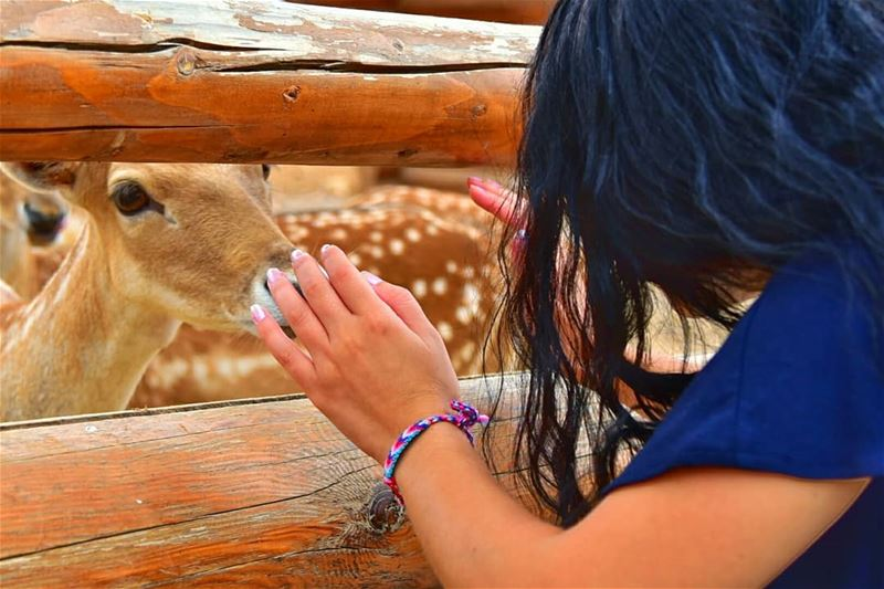Deer are the most graceful and beautiful creatures on earth i ever seen ❤❤... (Bchennâta, Liban-Nord, Lebanon)