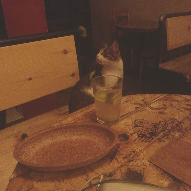Dinner date with  Antar[tica] my domesticated but always wild at heart cat! (Demo)