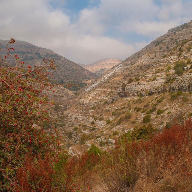 The Amazing colors of late summer including wild fruits!Nuances of browns, (Akoura, Mont-Liban, Lebanon)