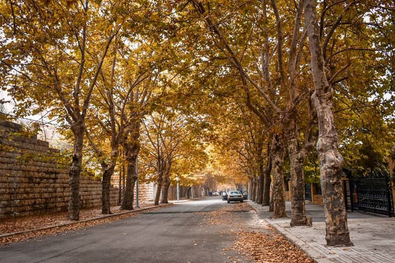 The Golden season 🍁🍂 - Sawfar Cornishe, Lebanon. fall  autumn ... (Sawfar, Mont-Liban, Lebanon)