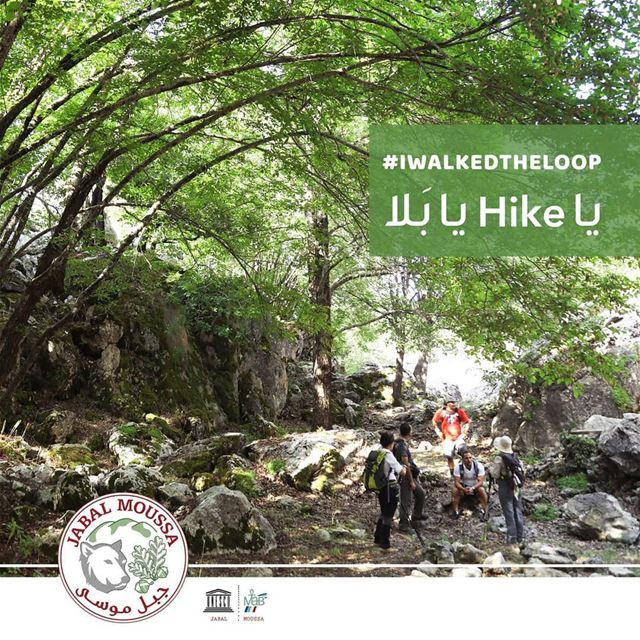 YOU TOO CAN WALK THE LOOP: call us at 09-643464 ; 71-944405 for more... (Jabal Moussa Biosphere Reserve)