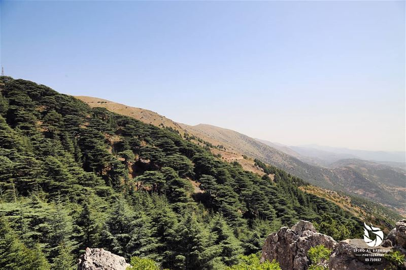 Amazing mountain view from Chouf !!!.......... (Al Shouf Cedar Nature Reserve)