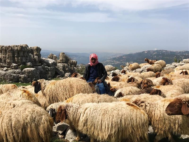 The mountains of Lebanon are peppered with sheep and their good shepherds....