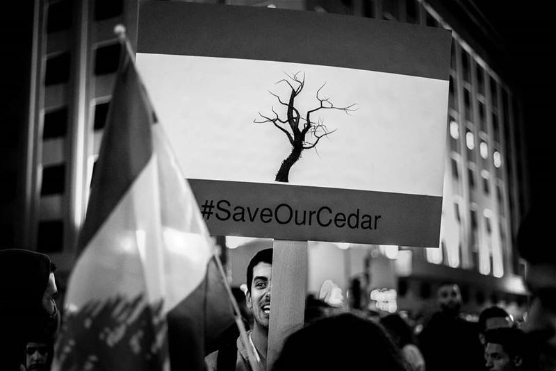 Save our cedarDuring the you stink protests in beirut 2015 © Rudy Aoun ... (Beirut, Lebanon)