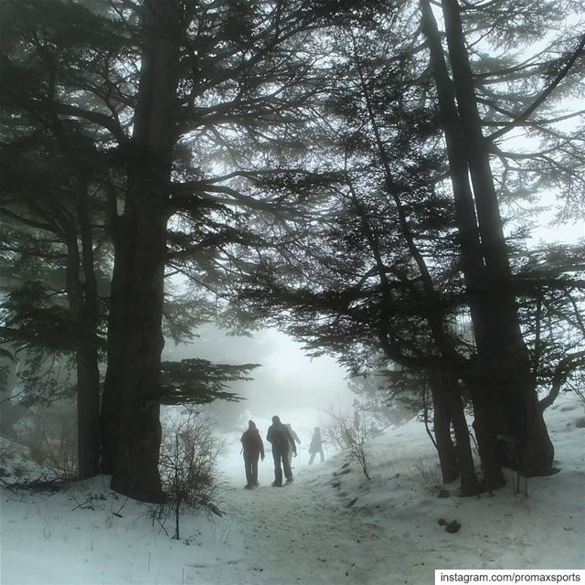 Join ProMax this Sun.Jan 13 to Tannourine Forest Reserve Snowshoeing 🍃 ... (Arz Tannoûrîne)
