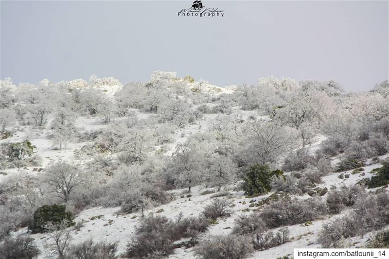 BE LIKE SNOW BEAUTIFUL, BUT COLD • • •  chouf  shoufreserve  lebanon ...