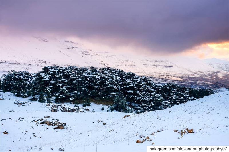 Hello winter! Just after a couple of snowy days. I managed to capture the... (Arz Bcharé)