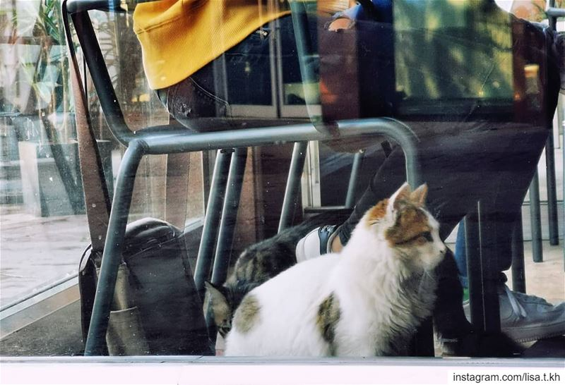 meow 🐈🐈..... streetphotography  yellow  cat  chair  resto  mall ... (Habtour,Le Mall-sin el fil)