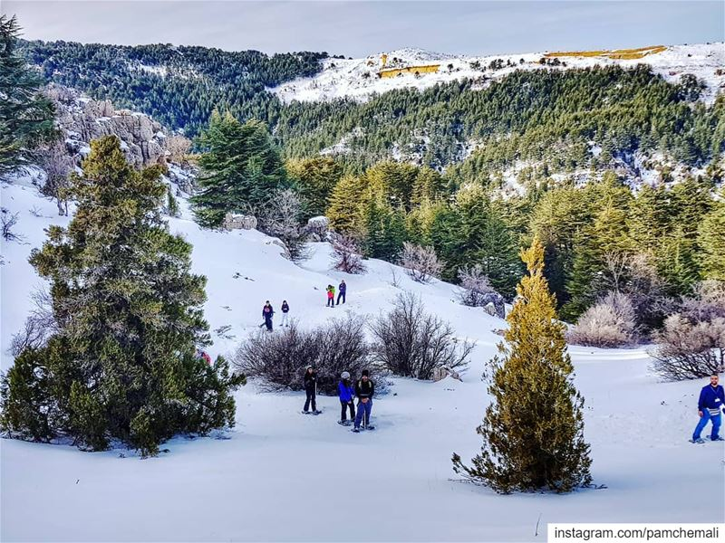 GUYS are you ready? ❄Spot urselves ↩@mouawadeliane @jdched @jinanajem ... (Arz Tannoûrîne)
