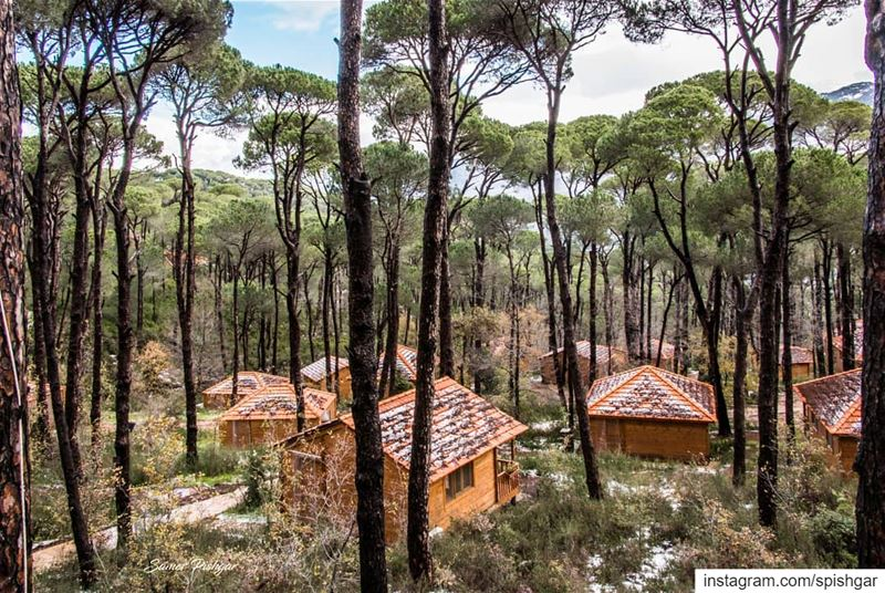 The cottages in the woods..A place to remember, just underneath the pines... (La Maison de la Forêt)