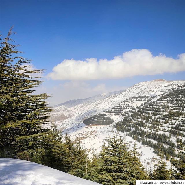 صباح الخير من الباروك Credits to @areej.khaddaj・・・Good morning 🔴⚪🌲⚪🔴... (Arz el Bâroûk)