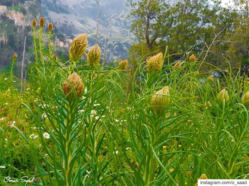 Hello Spring  spring  field  outdooradventures  green  mountains  lebanon ...