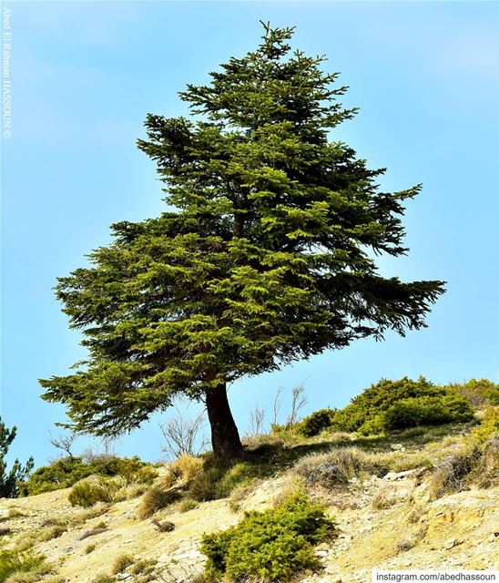 Alone on the top🌲............. LiveLoveAkkar  عكار  طبيعة  ... (El Qammoûaa)