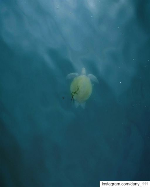 Batroun is home to hundred of Turtles that live close to the shore and i... (Batroûn)