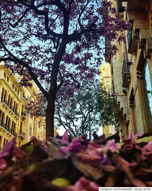 Praise Your Silence°..📍🌸 ....... beirut  running  morningrun ... (Downtown Beirut)