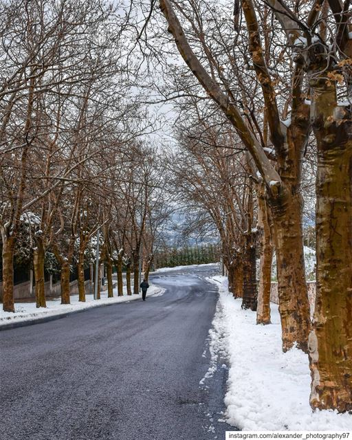 Good morning from snowy Sawfar ❄️🍁 - Yes this picture is taken on 21... (Sawfar, Mont-Liban, Lebanon)
