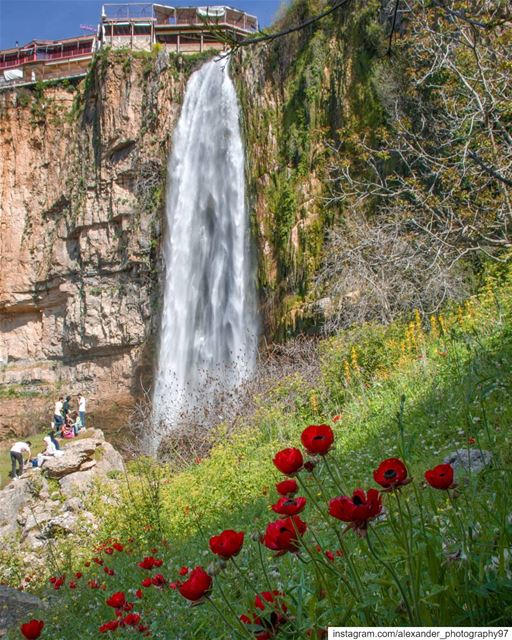 Finally, Spring is here 🌷⛰️ - The Waterfall of Jezzine and beautiful... (Jezzîne, Al Janub, Lebanon)