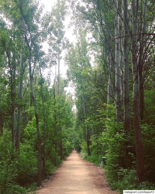 nature  green  forest  road  oneway  village  hightrees  spring  taanayel...