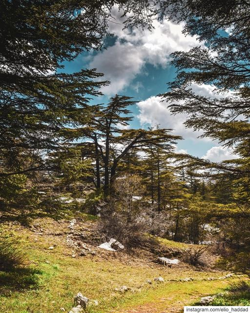 Morning 🌄   LiveLoveTannourine  LiveLoveBeirut  LiveLoveLebanon ... (Tannourine Cedars Nature Reserve)