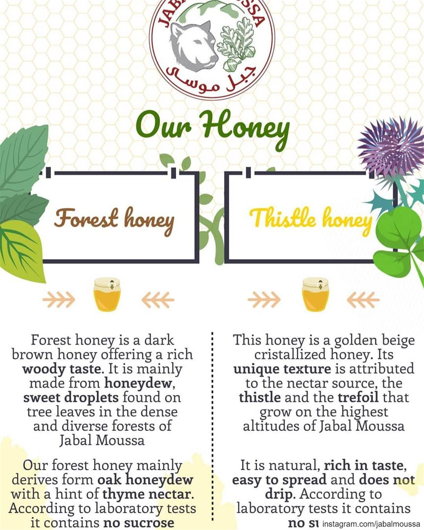 Learn more about our 2 types of Honey  Available at JabalMoussa's