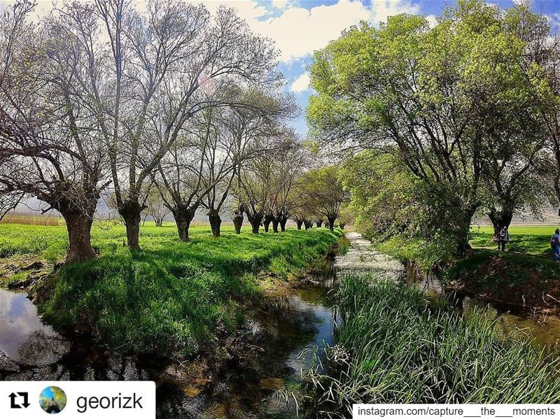 Repost @georizk (@get_repost)・・・Nature is not a place to visit. It is... (Aammiq Wetland)