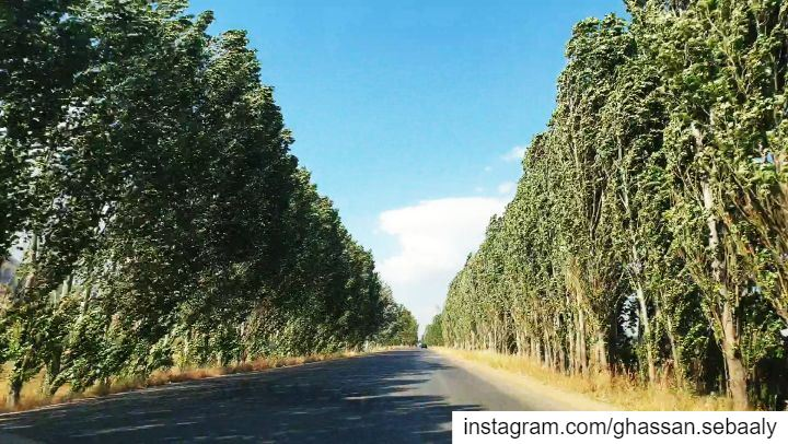 road  trip  lebanon  driving  cars  trees ... (Beqaa Governorate)