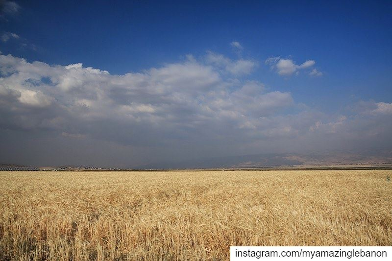 Out in the wheat fields🌾 a7labaladbil3alam 🇱🇧..... photo  love ... (Deir el Ahmar)