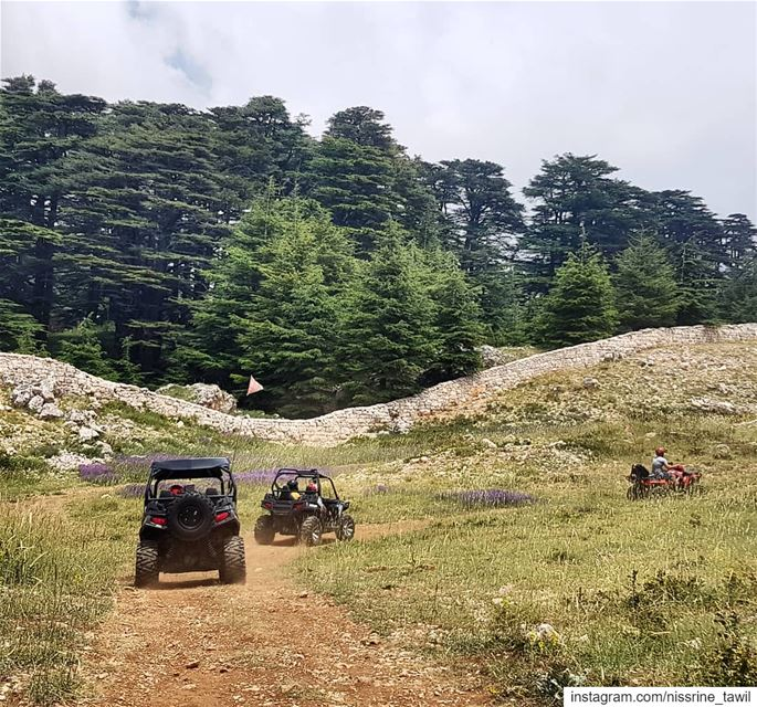 bcharre  cedars  lebanon  atv  outdoors  activities  northlebanon  nature... (Arz Bcharé)
