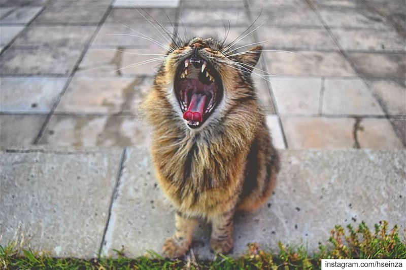 Made you yawn? No? What about now? Huh 🤔 And now? Ok now! cat ... (American University of Beirut (AUB))