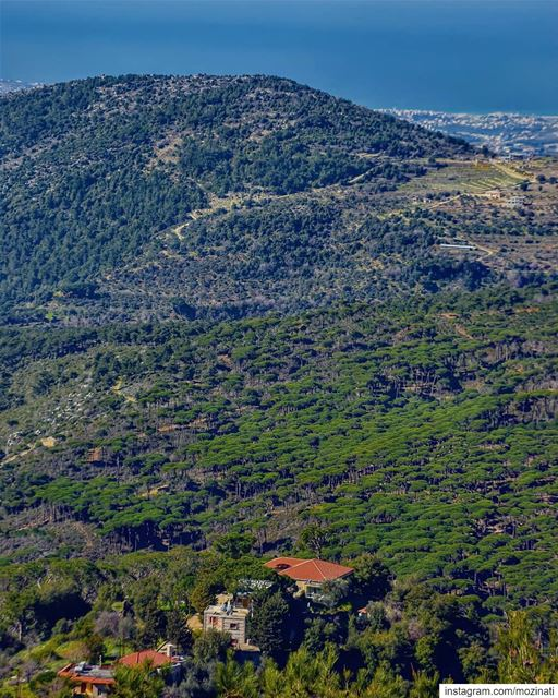 A green nature can be a medicine for our mind pain===================... (Jezzîne, Al Janub, Lebanon)