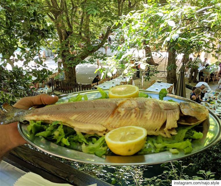 fish  lunchtime😋   lunch  yummy  delicious  fresh  lebanon  lebanese ...