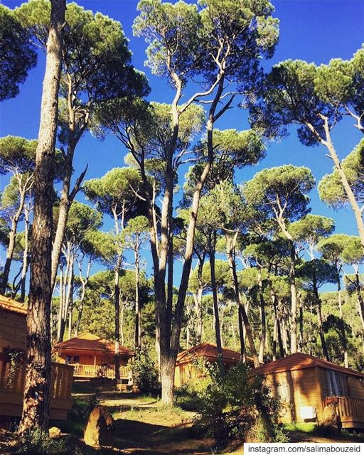 The quietest morning ever 🏡Have a wonderful day 🌞---------------------- (La Maison de la Forêt)