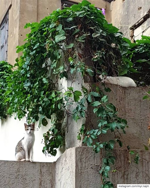 Neighborhood cuties ❤👀 ......... Lebanon  beirut  cats  cat ... (Beirut, Lebanon)