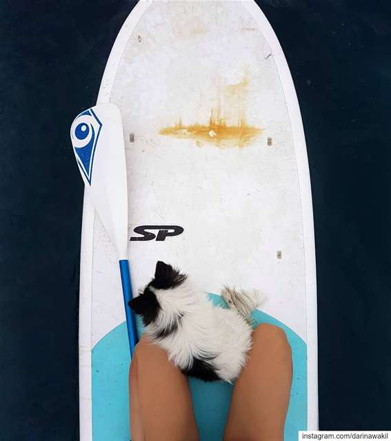 •Wasabi discovering SUP• 🐕..... wasabithedog  sup  colonelreef ...