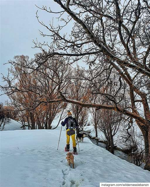 .*❄Join us this Sunday for a new magical snowshoeing experience to Balou3...