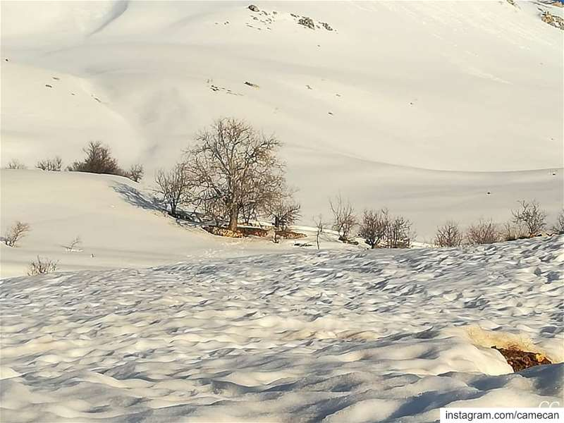 lebanon  sannine  winter  season  snow  livelovelebanon  livelovebeirut ...