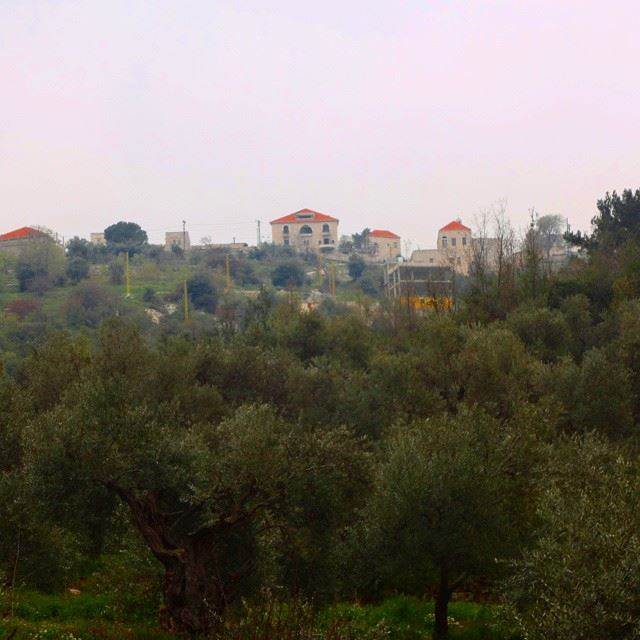 mountain natureshots olivetrees redbricks oldhouses