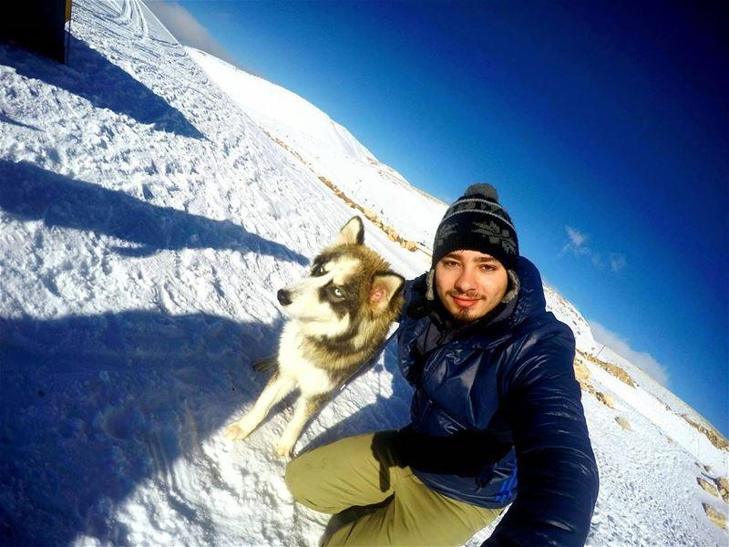 sunday camping camp hiking hike dogs animal husky russia cold freezing... (Aayoun El Siman)
