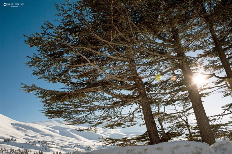 Never let anything stop you from shining ☉www.charbelfersan.com - © All... (Cedars of God)